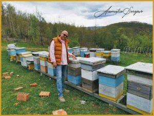 pčelinjak romanija aromatica